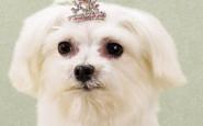accessori ridicoli cani - non si dice piacere