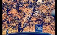 autunno autumn foglie alberi park parco parcheggio - buone maniere - bon ton - galateo - non si dice piacere