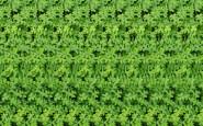 quadrifolgi fortuna - verde green non si dice piacere  bon ton buona maniere- galateo