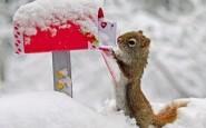 scoiattolo - lettera-natale-imbucare- inverno-neve-non-si-dice-piacere-blog-galateo