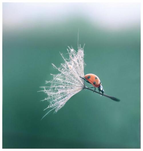 coccinella-portafortuna-volare-sognare-restyling-blog-non-si-dice-piacere