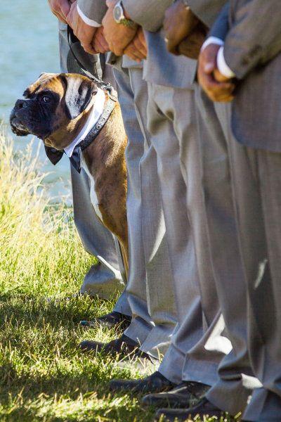animali-matrimonio-cuccioli-non-si-dice-piacere-bon-ton