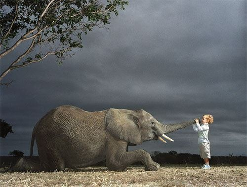 animali+matrimonio+pets+non+si+dice+piacere+blog+bon+ton