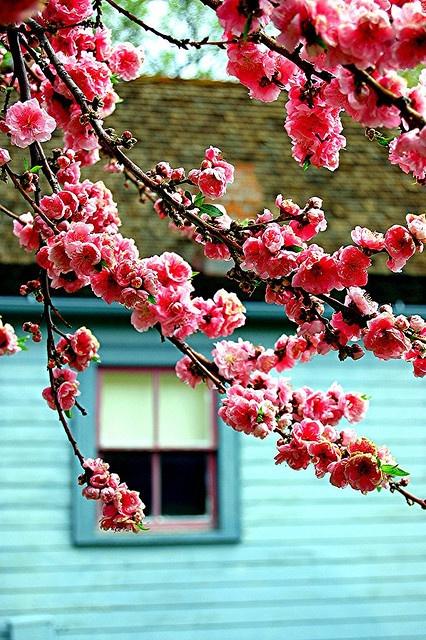 fiori-pesto-Pulizie-pasqua-ricordi-non-si-dice-piacere-bon-ton-buone-maniere