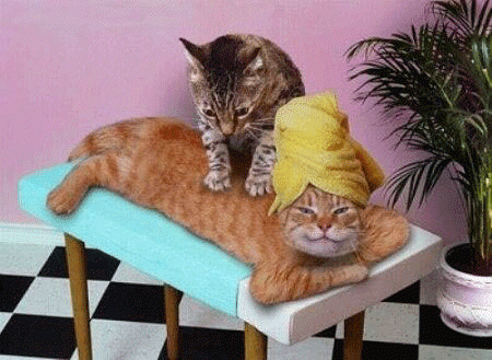 maSSAGGIO gatti-vita-coppia-bon ton-non-si-dice-piacere