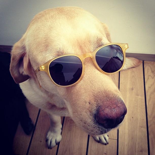 TYG spectatacles -enrico prisco- non si dice piacere- bon ton buone maniere-interivista-occhiali-stile-moda-bon ton-classico2_n