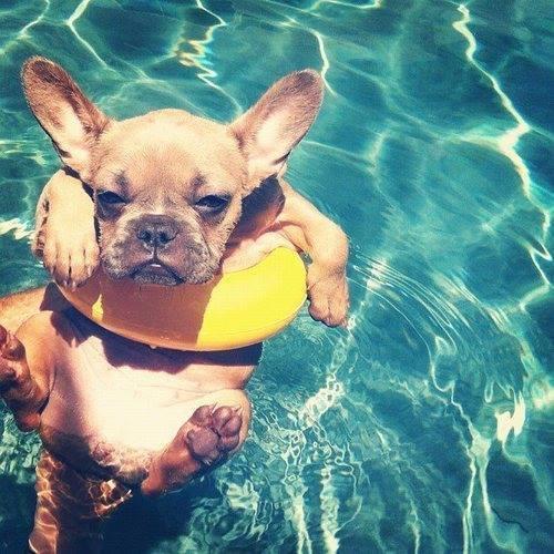 cane- estate-buoni-propositi-prova-costume-non-si-dice-piacere-bon-ton