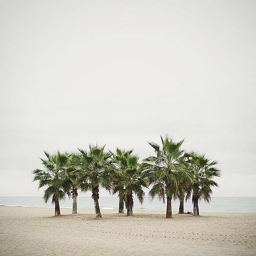 palme-palm-Galateo-digitale-netetiquette-etichetta-buone-maniere-wi-fi-bon-tonjpg