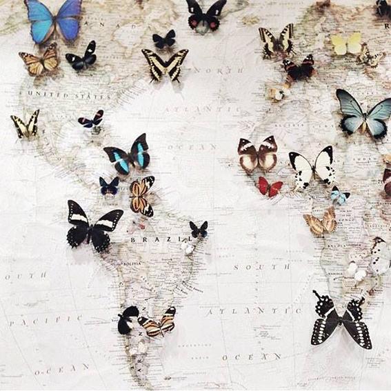 farfalle-mappa-mondo non si dice piacere-bon ton buone maniere