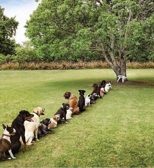 dog-line-coda-superare-ispirazioni-bagni-pubblici-toilette-buona-educazione-bon-ton-maniere-galateo-non-si-dice-piacere