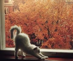 dormire-autunno-foglie-dormire-cambio-stagione-perchè-blog-non-si-dice-piacere-buone-maniere-galateo