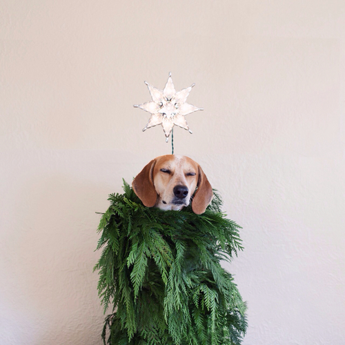 cane-dog-pet-non-si-dice-piacere-natale-made-com-design-regali-2014-natale-perfetti-online-shopping