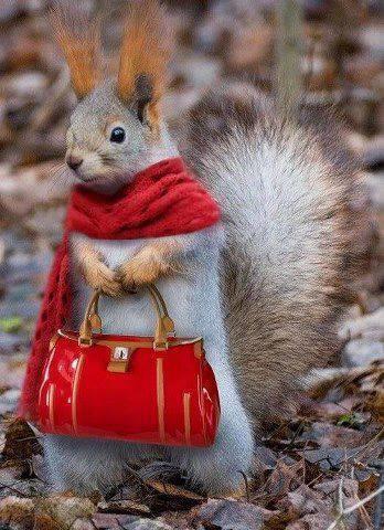scoiattolo-borsetta-bon-ton-viaggiatori-educati-maleducati-viaggio-galateo-buone-maniere-non-si-dice-piacere