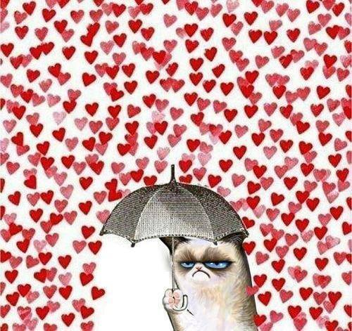 hungry-cat-san-valentino-papavero-smooky-poppy-the-body-shop-non-si-dice-piacere-bon-ton-buone-maniere