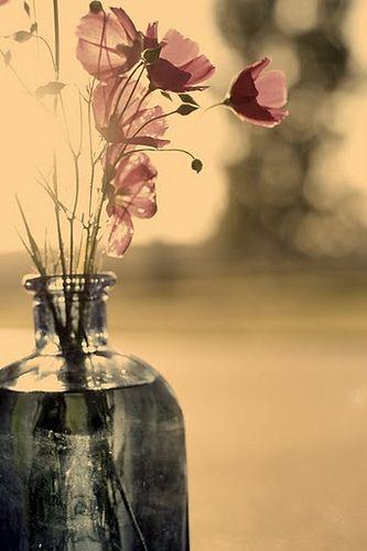 poppy-an-valentino-papavero-smooky-poppy-the-body-shop-non-si-dice-piacere-bon-ton-buone-maniere-campo