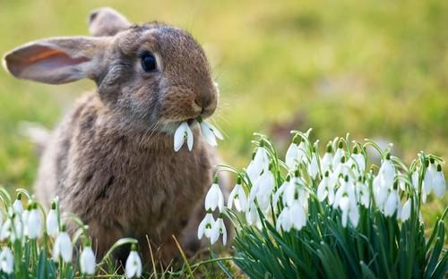 bunny-coniglio-pasqua-galateo-bon-ton-auguri-tavola-come-comportarsi-pasquetta-viaggi-non-si-dice-piacere.