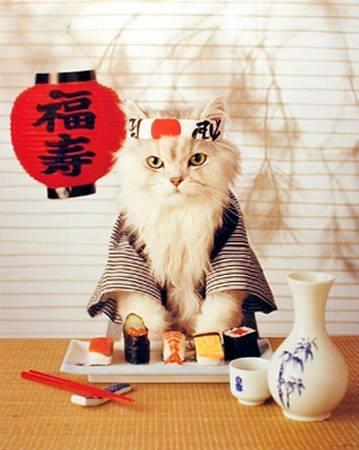 gatto-sushi-bon-ton-expo