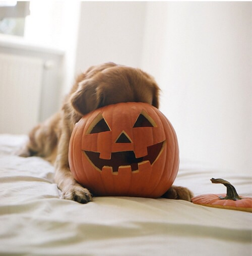 halloween - nuove tradizioni- animali