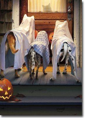 paura-halloween sentimenti travestimenti
