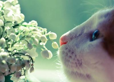 profumo-fiori-essenze-storia