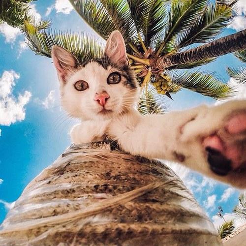 come fare selfie - gatto- controluce