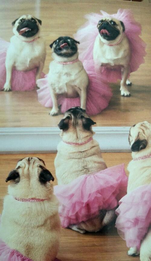 carilini- tutu-rosa-tulle danza ballerine