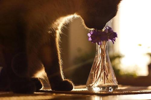 smell - profumo- dior