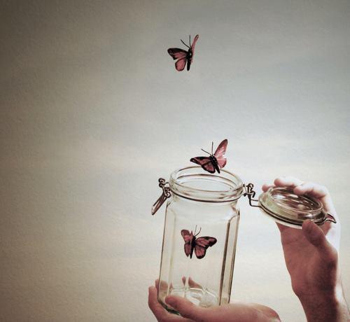 collezione farfalle- mostrare