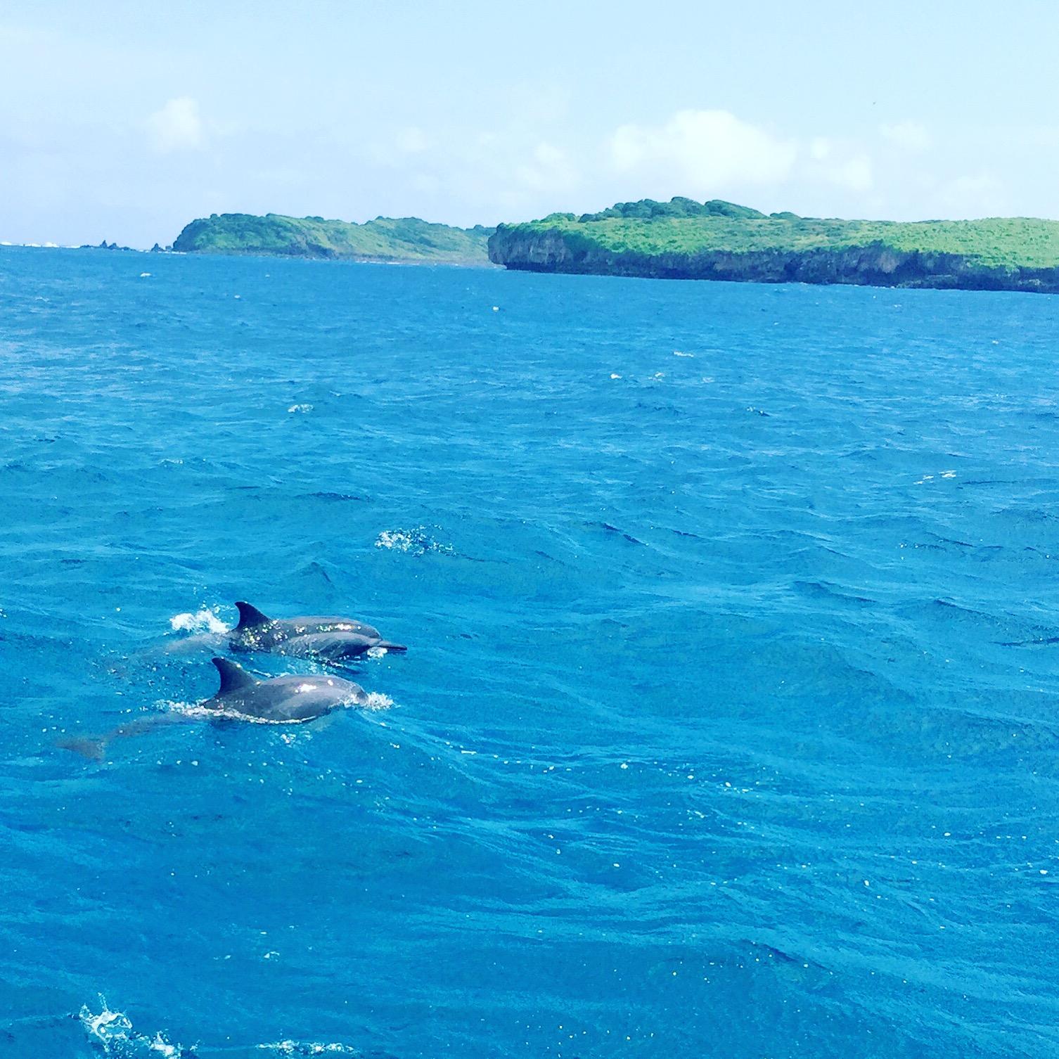 delfini- brasile - isola- paradiso- fernando- cosa vedere