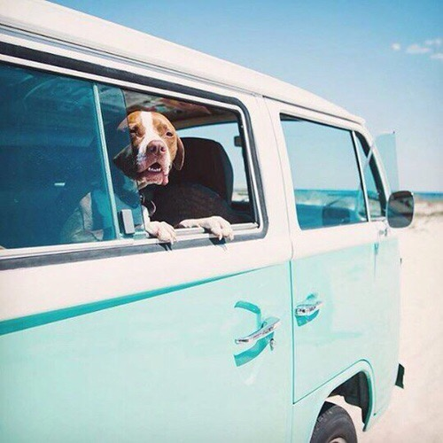 estate - cani- bon -ton- sempre insieme- spiaggia regole galateo (1)