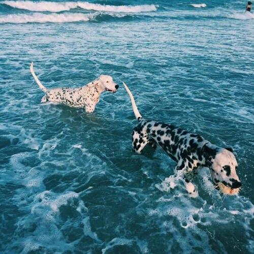 estate - cani- bon -ton- sempre insieme- spiaggia regole galateo (2)