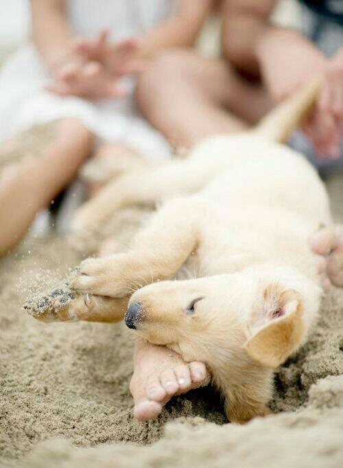 estate - cani- bon -ton- sempre insieme- spiaggia regole galateo (3)