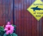 surfing estate