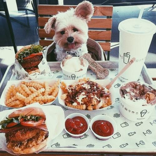 mangiare-panino-farcito-mani-hamburger-galateo