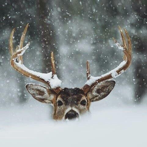 renna natale inverno simbolo- decorazione