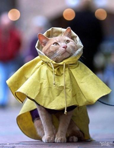 gocce-pioggia-estate-finestra-amare-fermarsi (4)