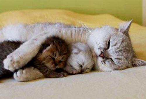 mamme-sonno-dormire-pisolini-io-e te (6)gatti