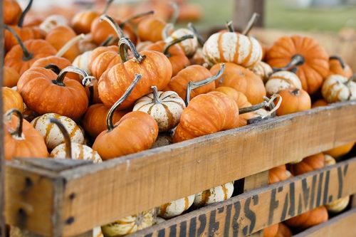 decorare-casa-zucche-autunno-centrotavola-non-solo-halloween scarpe sholl autunno