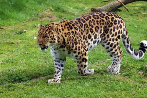 animali via estinzione dove vederli