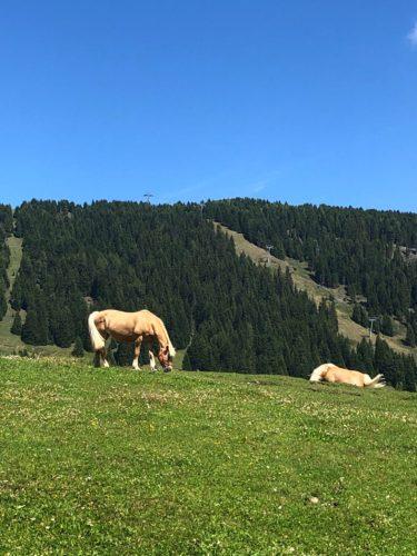 galateo animali pascoli montagna estate non si dice piacere